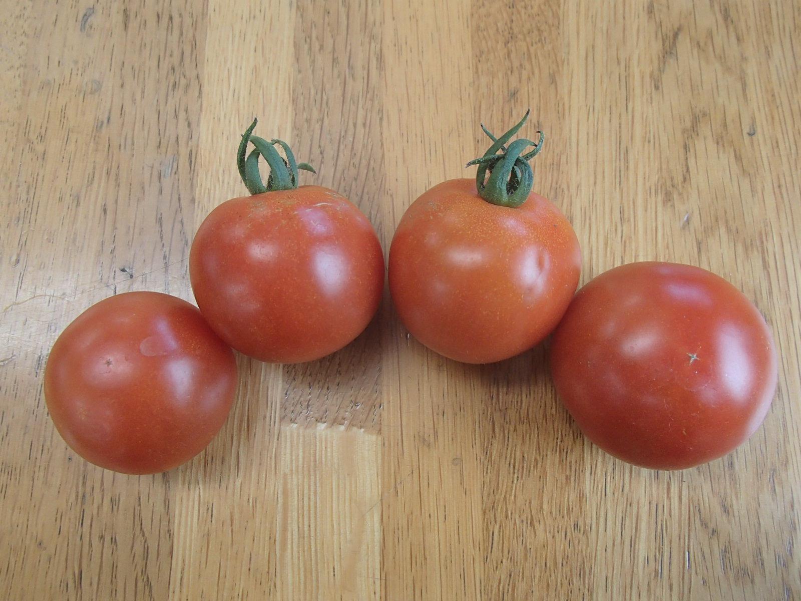 0617トマト収穫 008.JPG
