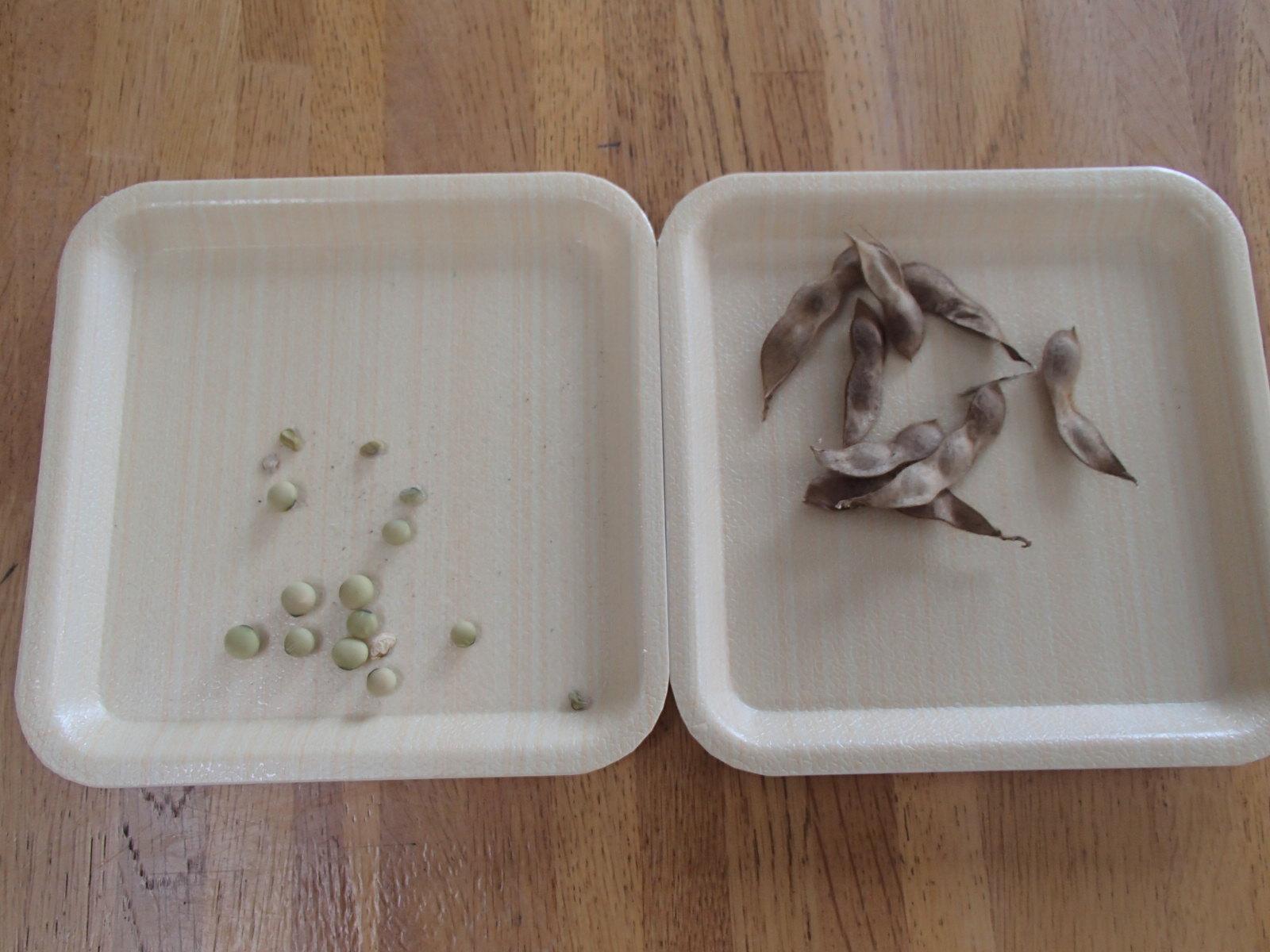 0729枝豆収穫 002.JPG