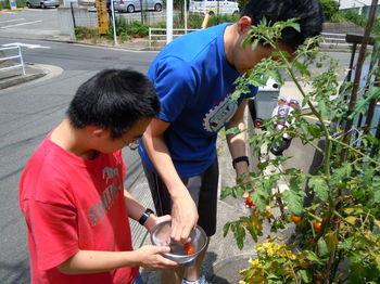 キュウリ・トマト収穫 2012-07-11 002.JPG